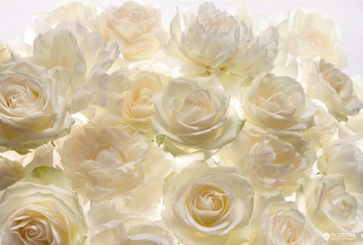 Фотообои Komar Shalimar (Розы) XXL4-007 3.68х2.48