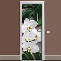 Декоративная виниловая наклейка на дверь ReD Листья монстеры, 65х200 см