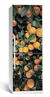 Виниловая наклейка на холодильник ReD Цитрус 01. 65х200 см