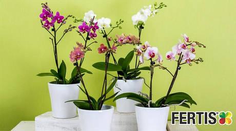 Рідкі добрива для квітів та кактусів