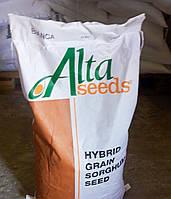 Семена сорго Бьянка, фото 1