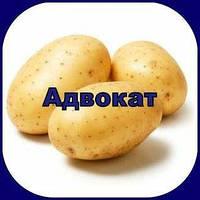 Гербіцид Адвокат, КС
