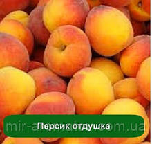 Віддушка Персик-Нектарин