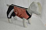 Костюм для собак Крутые 90-е №3 универсальный 43х60 (плюш), фото 3