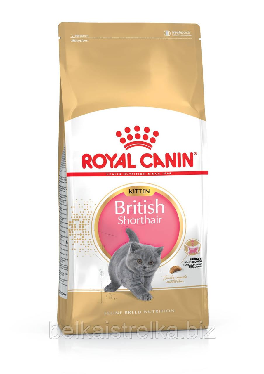 Royal Canin Kitten British Shorthair - корм для британских короткошерстных котят от 4 до 12 месяцев 2 кг
