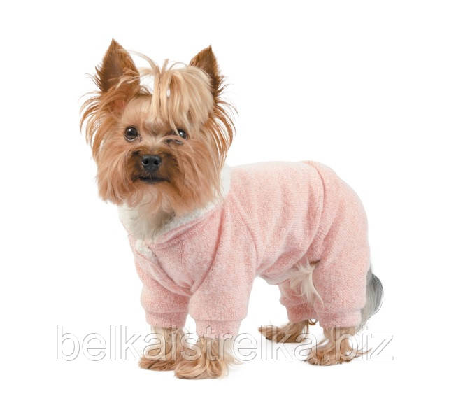 Костюм для собак Pet Fashion Солли персик, для девочек, XXS