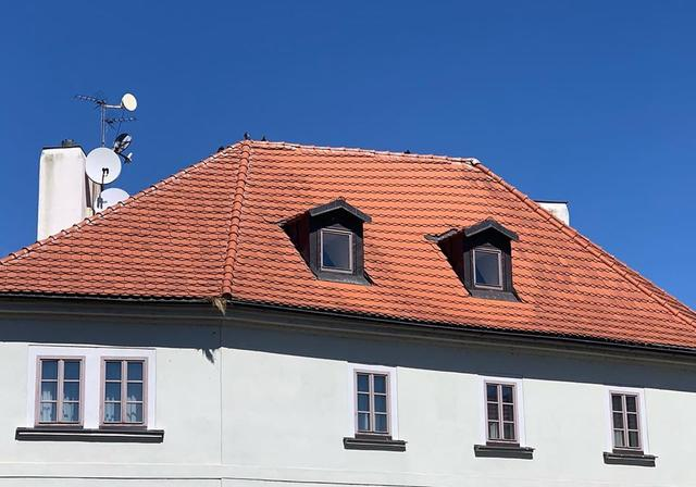 Птицы на крыше