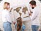Скретч карта мира Discover & Scratch World Gold ENG Детальная скретч карта мира, фото 7