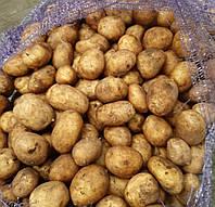 Картопля насіннева у Луцьку Оптом, Весна 2020