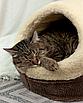 Домик лежанка для котов собак теплый меховой кремовый бежевый, фото 10