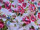 Коттон стрейчевый рисунок яркие цветы, розовые на белом, фото 3