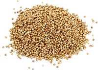 Корианд зерно