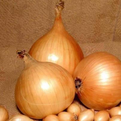 Лук севок Голиат (арпаш), 1 кг — желтый, длинный, фото 2