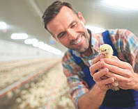 Освещение птичников и животноводческих ферм