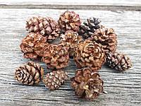 Шишки сосны горной 3-5 см, 10 шт/уп., 20 грн