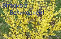 Вітаємо З Великоднем! Наш графік роботи 18,19, 20.04.20
