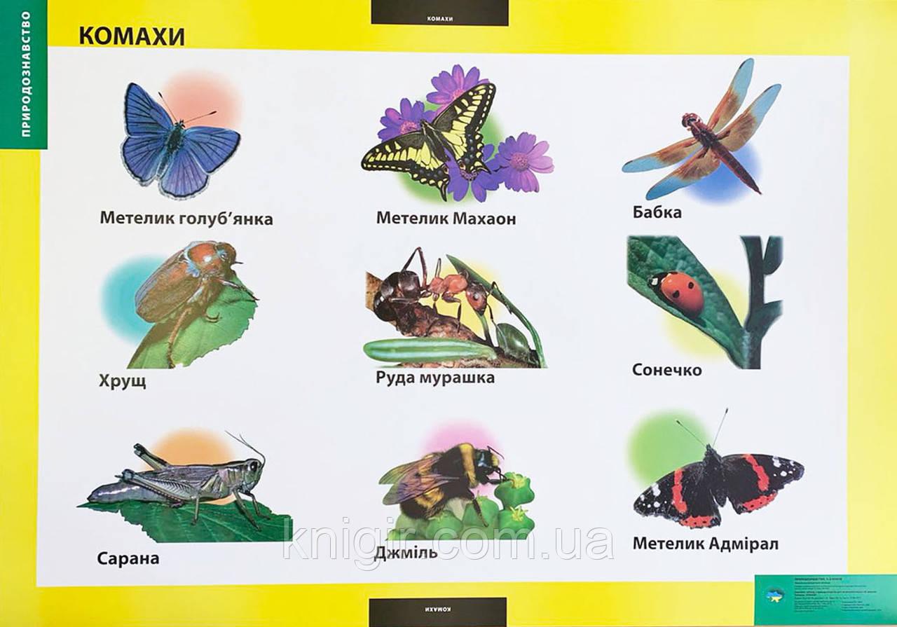 Комахи (95х70 см) Природознавство 1-2 кл