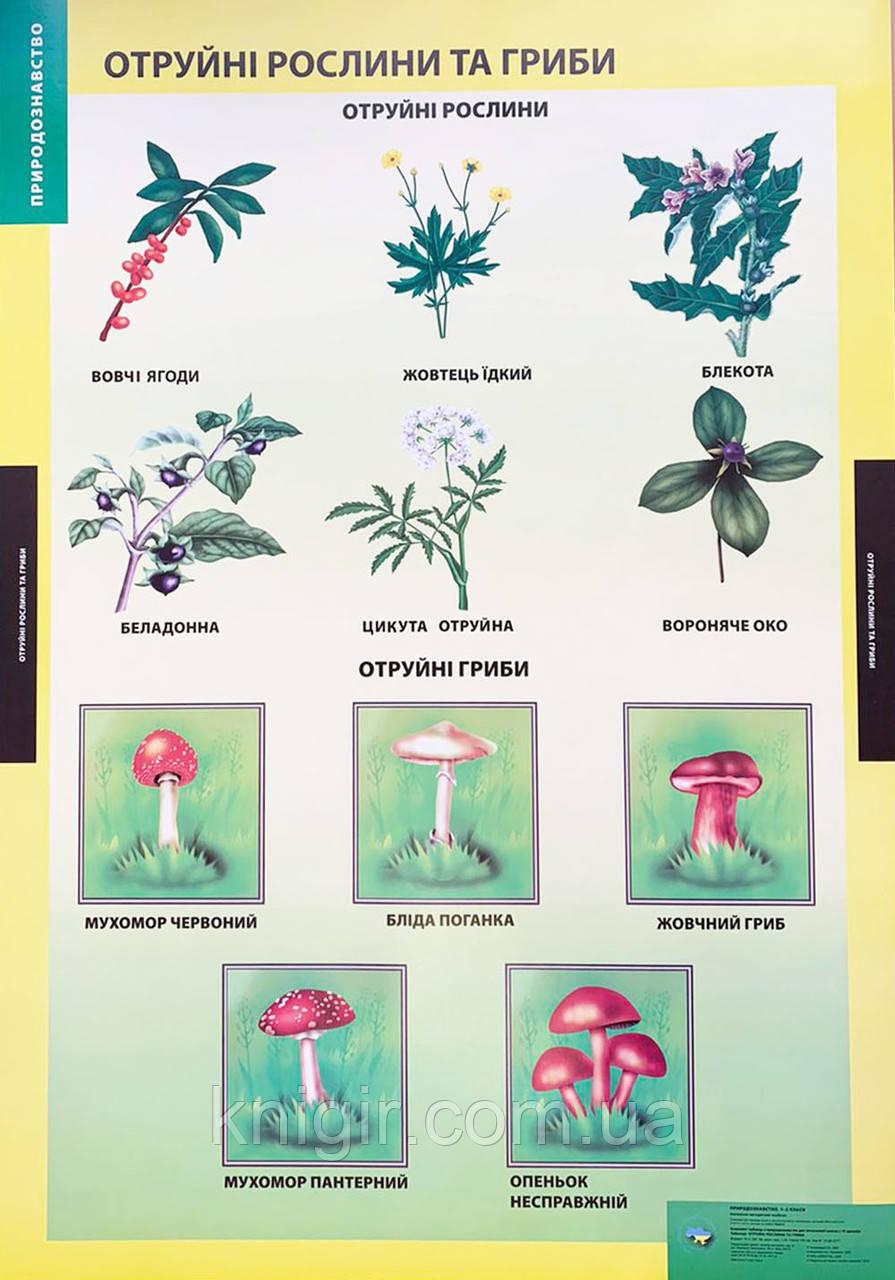 Отруйні рослини та гриби (95х70 см) Природознавство 1-2 кл