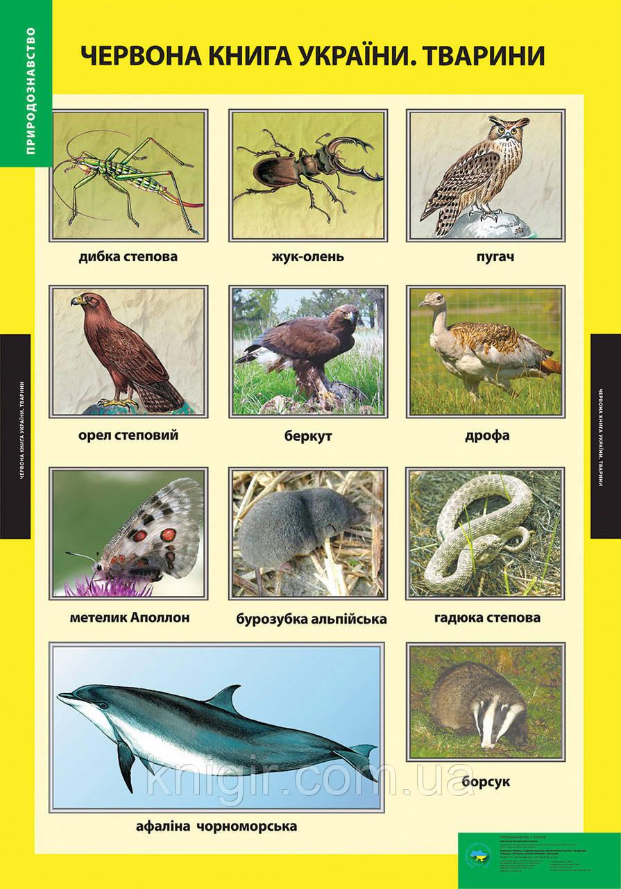 Червона книга України Тварини  (95х70 см) Природознавство 1-2 кл