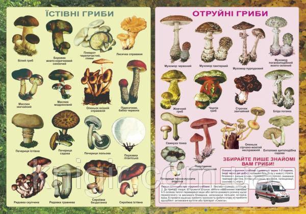 Отруйні та їстівні гриби 50*70 см
