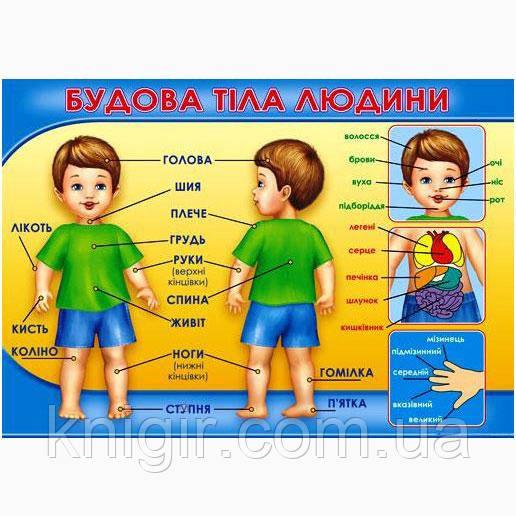 Будова тіла людини (47х67 см)