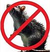 VENDETTA (Вендетта). Для защиты от грызунов в домах, зернохранилищах и амбарах. Бродифакум гранула 300гр., фото 2