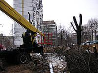 Спиливание тополей Киев
