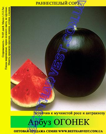 Семена арбуза Огонек 10кг (мешок), раннеспелый сорт, фото 2