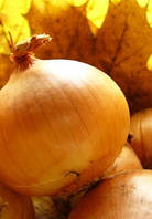 Семена лука Шилтон F1 50 000 сем. Agri.