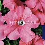 Петунія грандіфлора Браво F1 (колір на вибір)1000 шт., фото 2