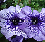 Петунія грандіфлора Браво F1 (колір на вибір)1000 шт., фото 5