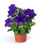 Петунія грандіфлора Браво F1 (колір на вибір)1000 шт., фото 6