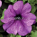 Петунія грандіфлора Браво F1 (колір на вибір)1000 шт., фото 7