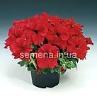 Петунія грандіфлора Браво F1 (колір на вибір)1000 шт., фото 8