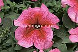 Петунія грандіфлора Браво F1 (колір на вибір)1000 шт., фото 9