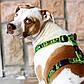 Шлея для собак, черно-белая Fancy Dress Hound Dog (Рогз) XL: 60-100 см, фото 4