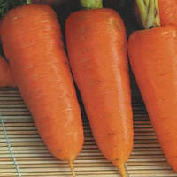 Курода Шантанэ семена моркови Италия Semenaoptom 10 г