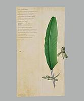 Перо гусиное для каллиграфии Dallaiti Piu04 оливковое