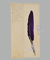 Перо гусиное для каллиграфии Dallaiti Piu01 фиолетовый
