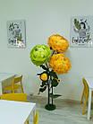 Ростовые, интерьерные цветы, фото 2