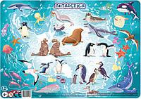 """Большой детский пазл картина с рамкой """"Животные Антарктиды"""" DoDo (на планшете)"""