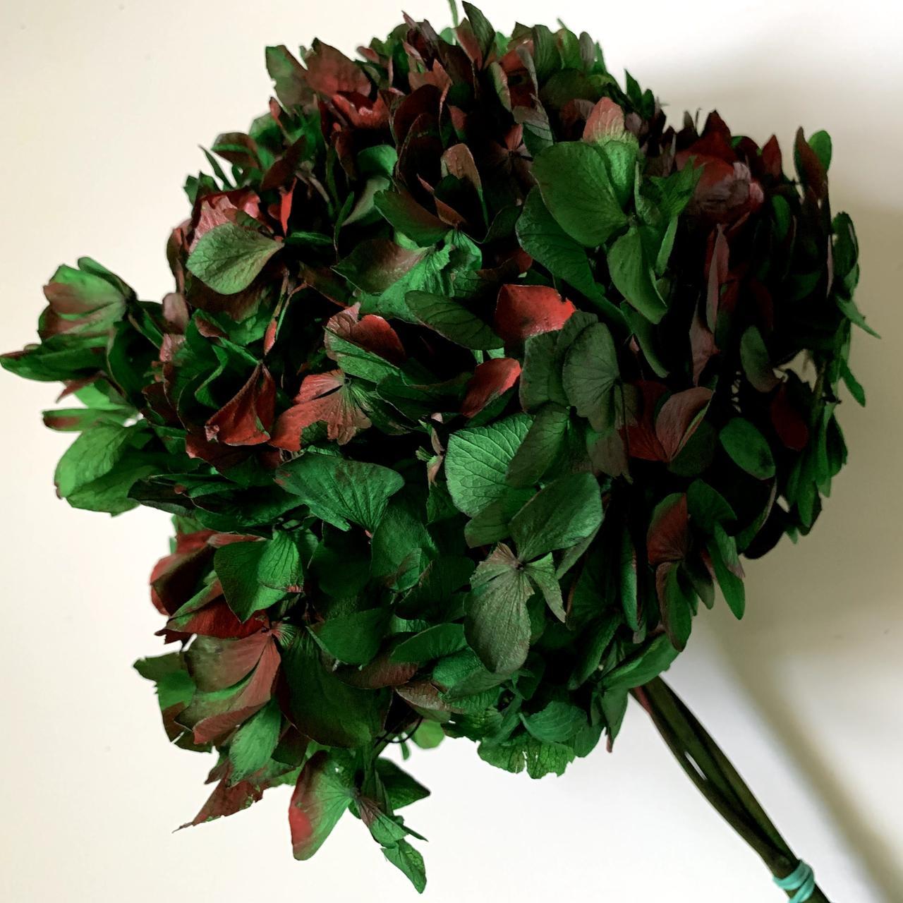 Гортензия зелено-красная