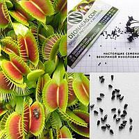 Настоящие семена Венериной мухоловки - хищного, экзотического, многолетнего растения. В упаковке 5 семян.