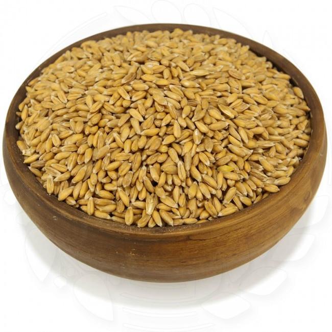Спельта натуральный 100 кг. без ГМО