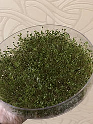 Емкость для проращивания зерен и семян (дополнительная), 1 ярус