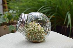 Банку-спраутер для пророщування зерен і насіння Semini 400 мл