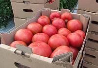 Томат розовый Эсмира (Esmira RZ) F1 - Rijk Zwaan (Рийк Цваан), уп. 1 000 семян (индетерминантный)