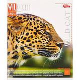 Тетрадь цветная 96 листов, клетка «Дикие котики» / зошит 96 аркушів в клітинку, фото 5