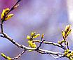 """Средство для борьбы со слизнями\улитками на всех видах растений и подвалах; инсектицид  """"Слизень НЕТ"""" 20г, фото 5"""