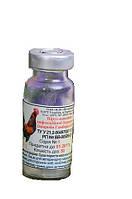 Вакцина против инфекции бурсальной болезни кур Гамборо БГ 50 доз Униев